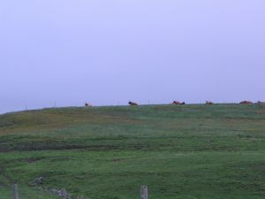 Imagine meeting these in a dense fog