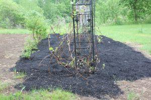 Some stuff got done despite the log attack, like the grapevine revamp.
